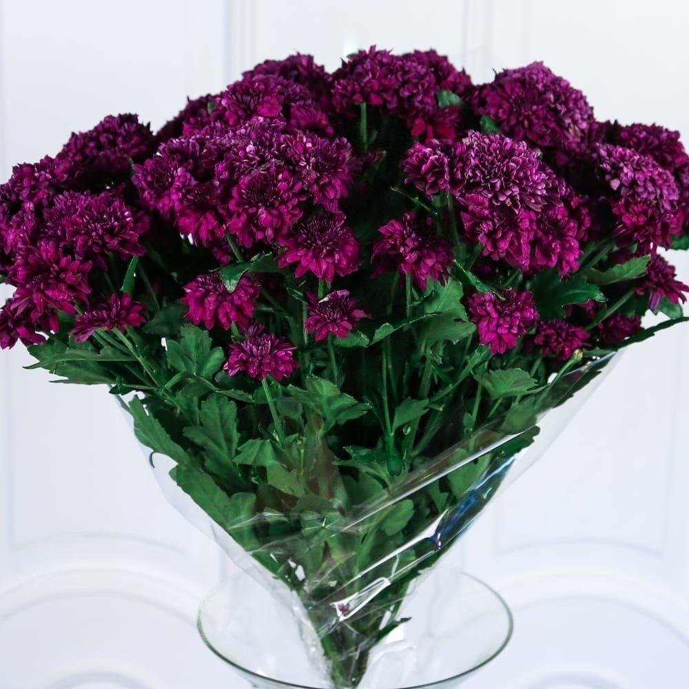 Букет 15 фиолетовых хризантем
