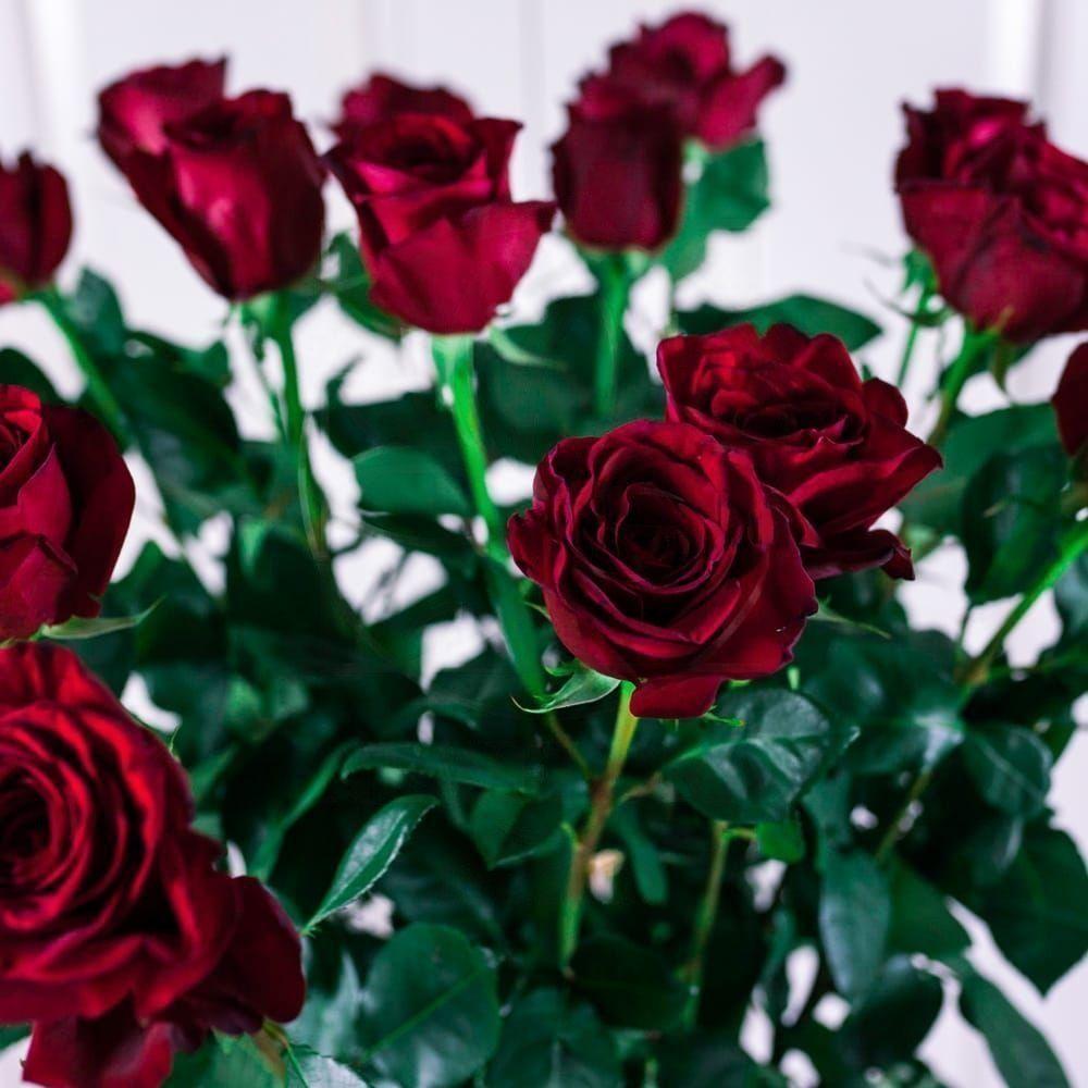 Букет 17 красных роз высотой 140см