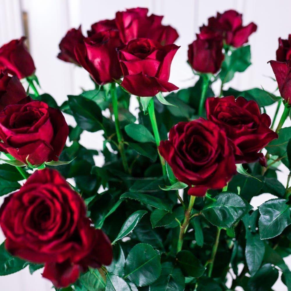 Букет 21 красная роза высотой 140см