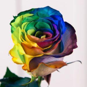 Радужные розы поштучно (Premium)