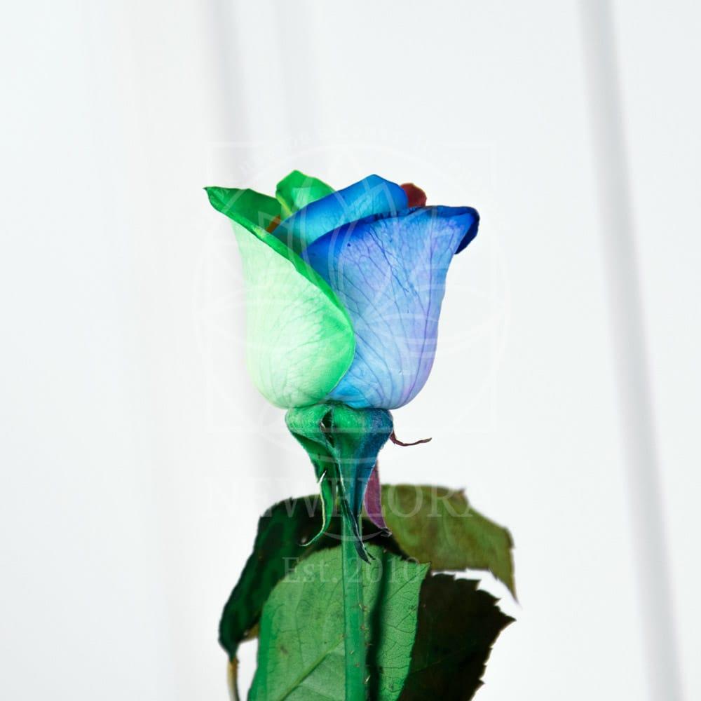 Радужные розы поштучно (мелкий бутон)