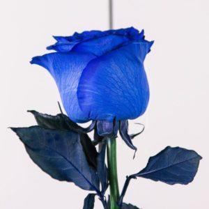 Синие розы поштучно (Premium)