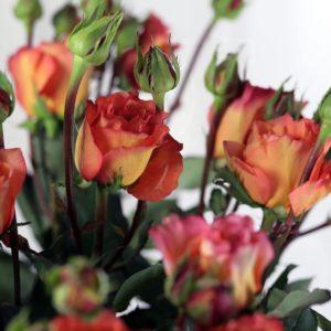 Букет 21 персиковая роза 60см сорт Victorian Free Spirit (Premium)