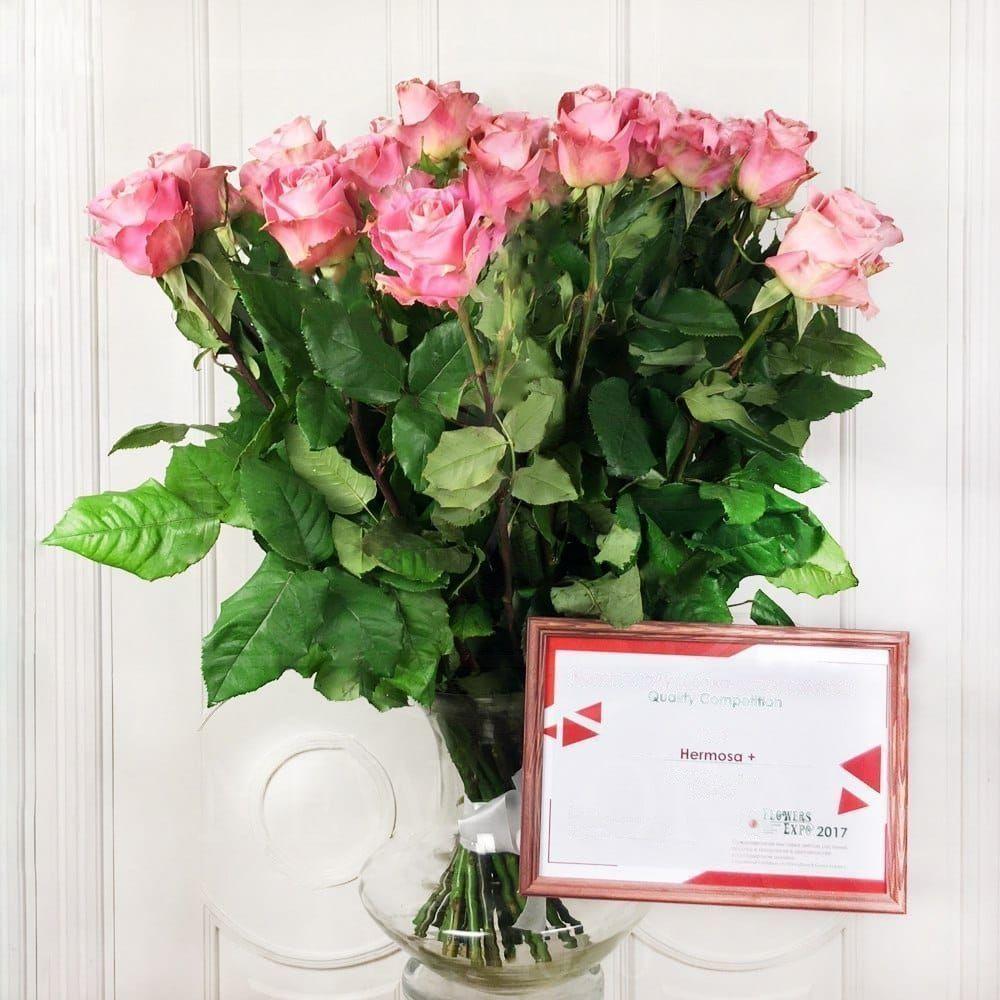 Букет 25 розовых роз Hermosa (Premium)