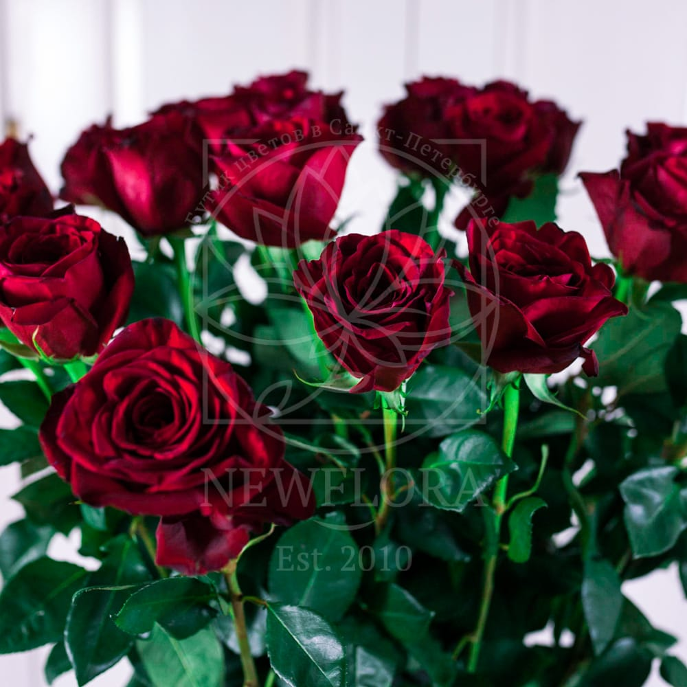 Букет 13 красных роз высотой 140см