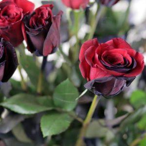 25 черно-красных роз (Premium) в вазе
