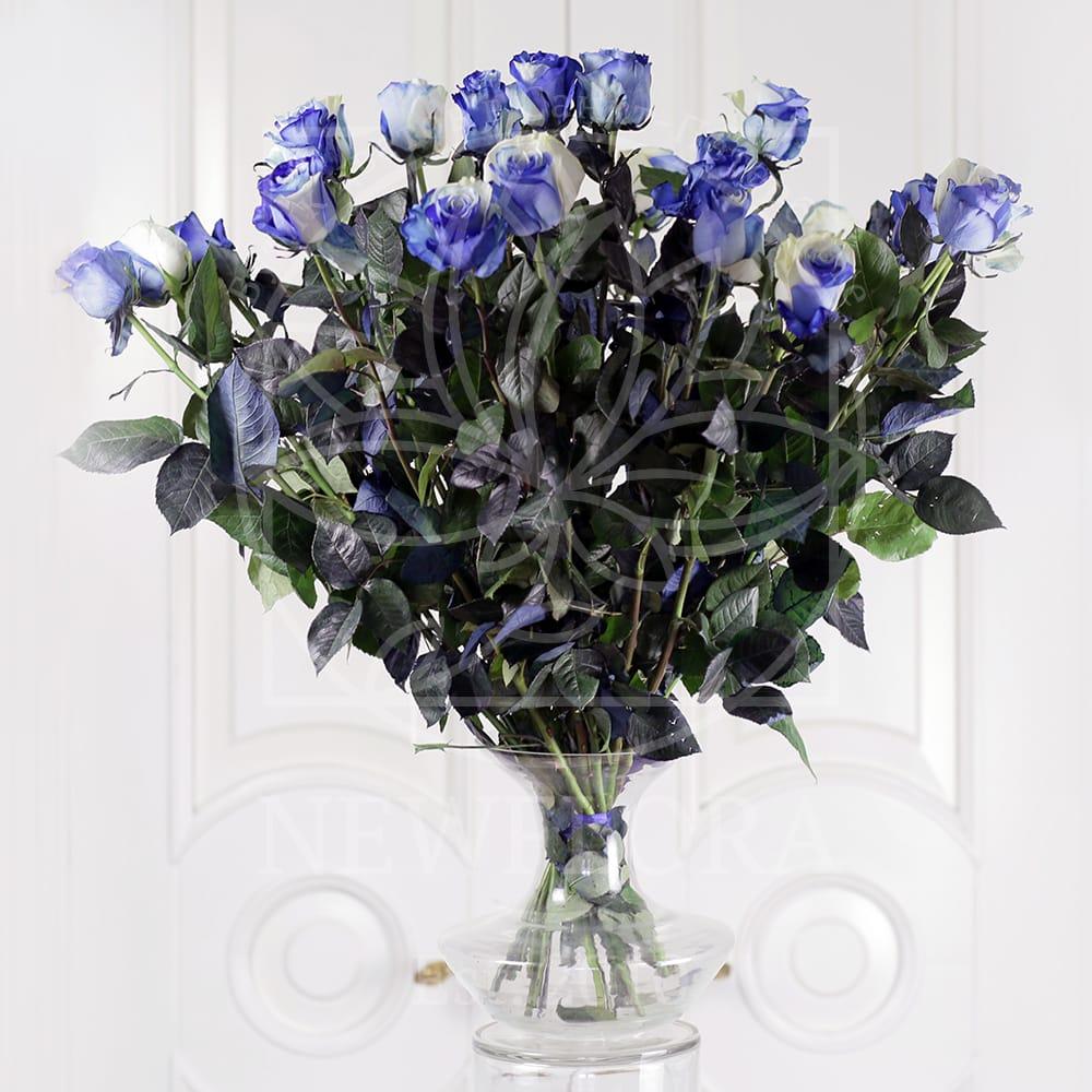 Букет 25 бело-голубых роз (Premium)