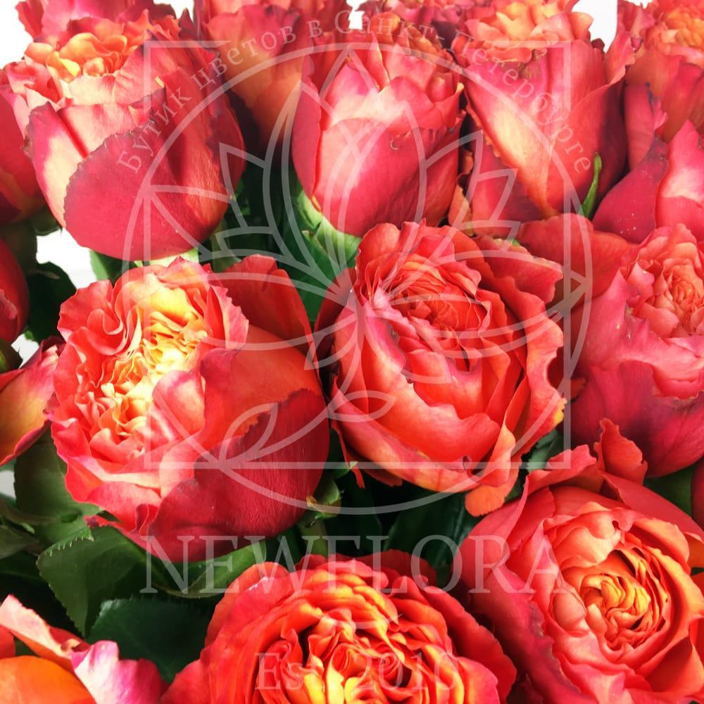 Букет 25 пионовидных роз High Intense