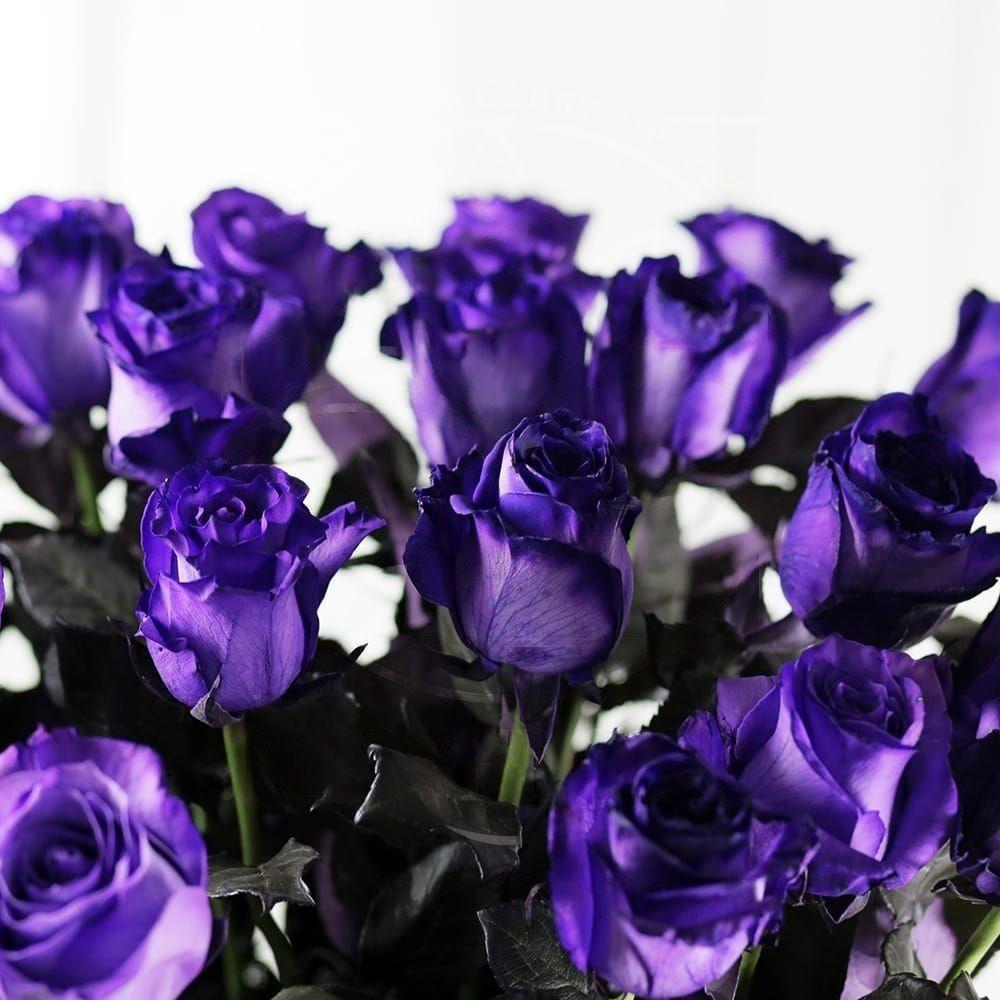 Букет 25 фиолетовых роз (Premium)