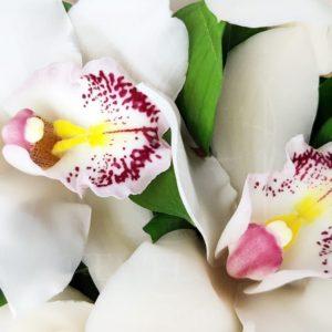 Букет 35 белых орхидей с зеленью