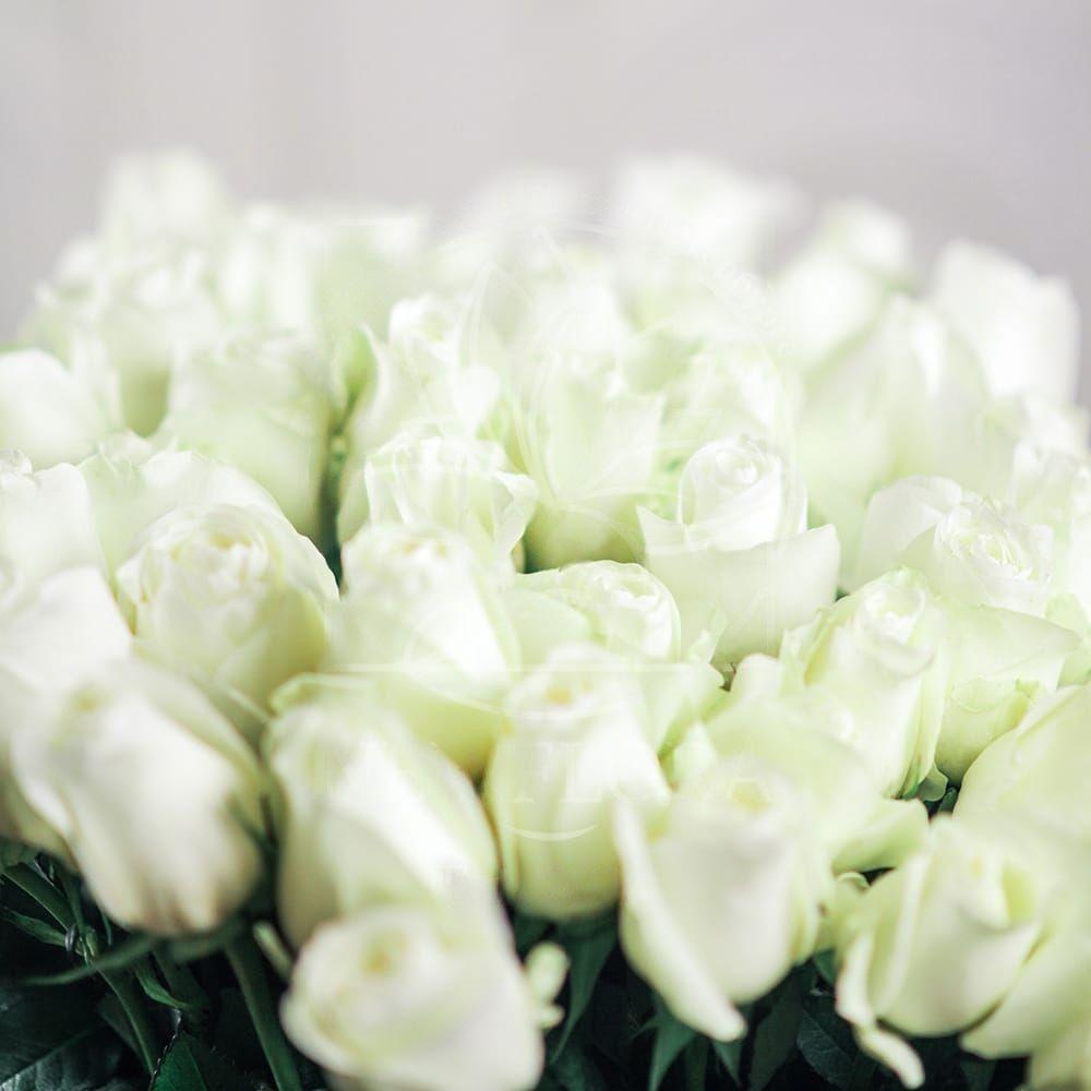 Букет 51 белая роза 70см сорт Proud (Юж. Америка)