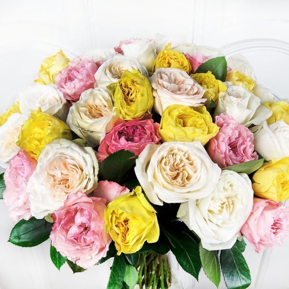 Букет 51 пионовидная роза микс