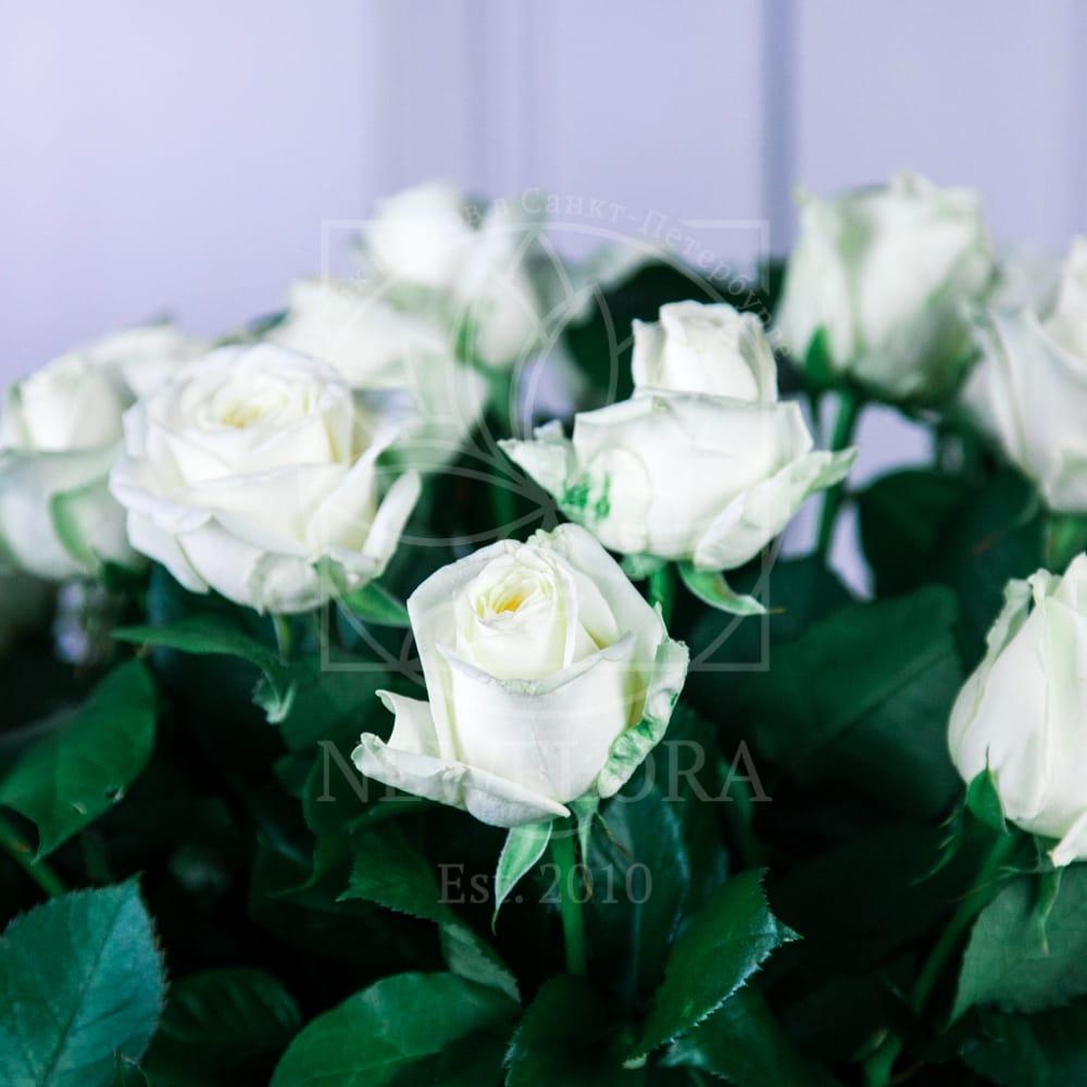 Корзина цветов 51 белая роза (Голландия)