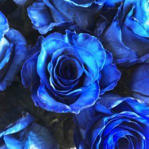 Букет 51 синяя роза (Premium)
