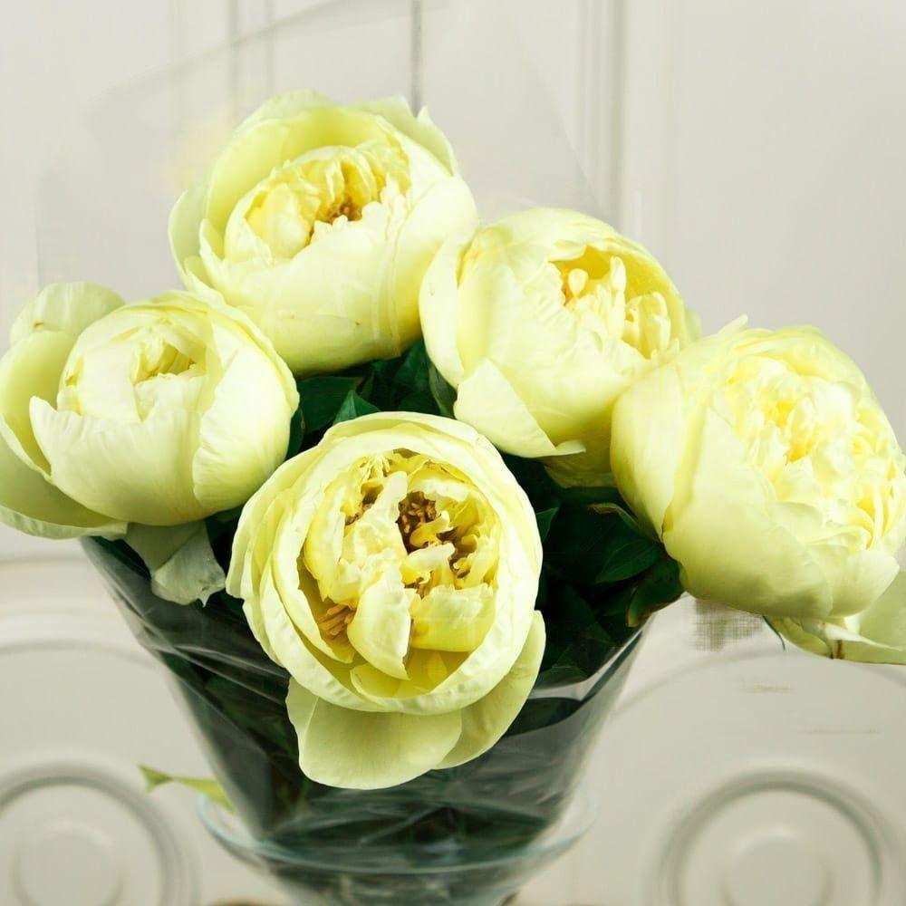 Букет 5 лимонных пионов (lemon chiffon)