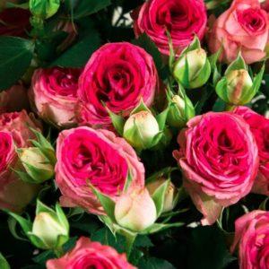 Букет 5 розовых кустовых роз (Premium)