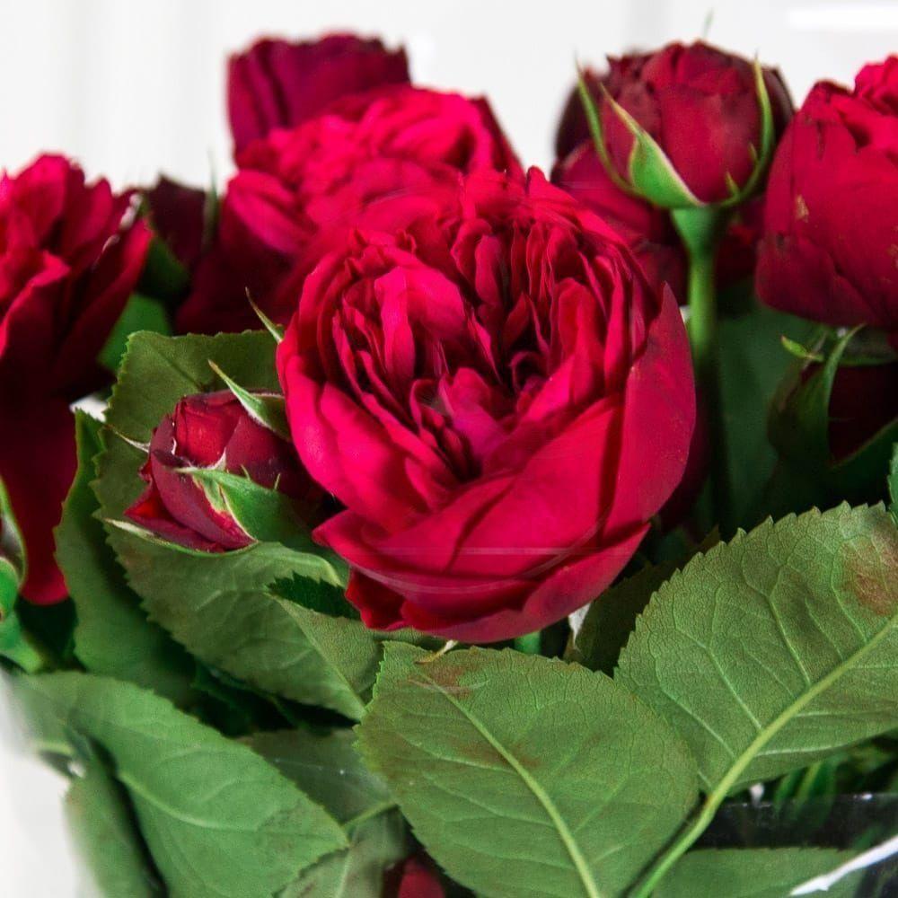 Букет 51 пионовидная кустовая роза Red Piano с зеленью