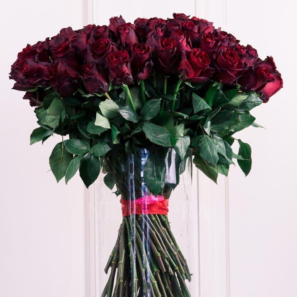 Букет 75 бордовых роз (Explorer)