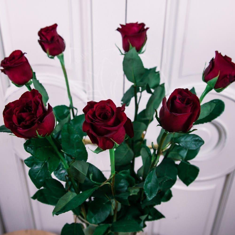 Букет 7 красных роз высотой 100см
