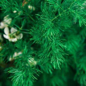 Букет душистой зелени с эвкалиптом