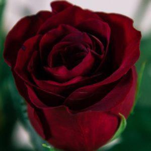 Букет 9 красных роз высотой 140см