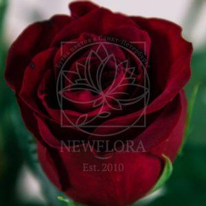 Букет 21 красная роза 130см