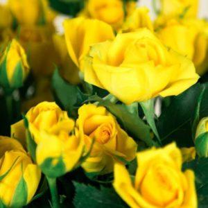 Букет 9 желтых кустовых роз (60-70см)