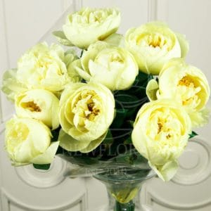 Букет 9 лимонных пионов (lemon chiffon)