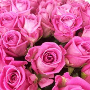 Букет 101 розовая роза сорт Аква