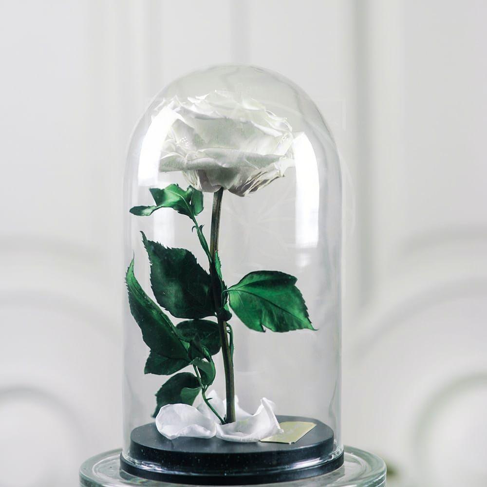 Белая роза в колбе DisneyRose