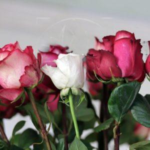 Букет 21 роза 80см сорт Iguazu (Premium)
