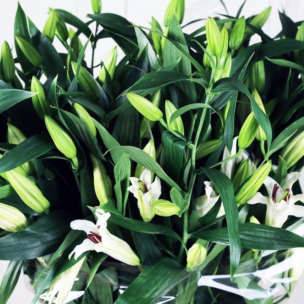 Букет 19 белых лилий