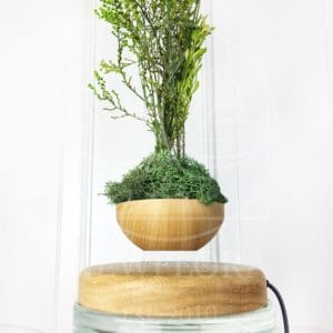 Левитирующий горшок со стабилизированной зеленью