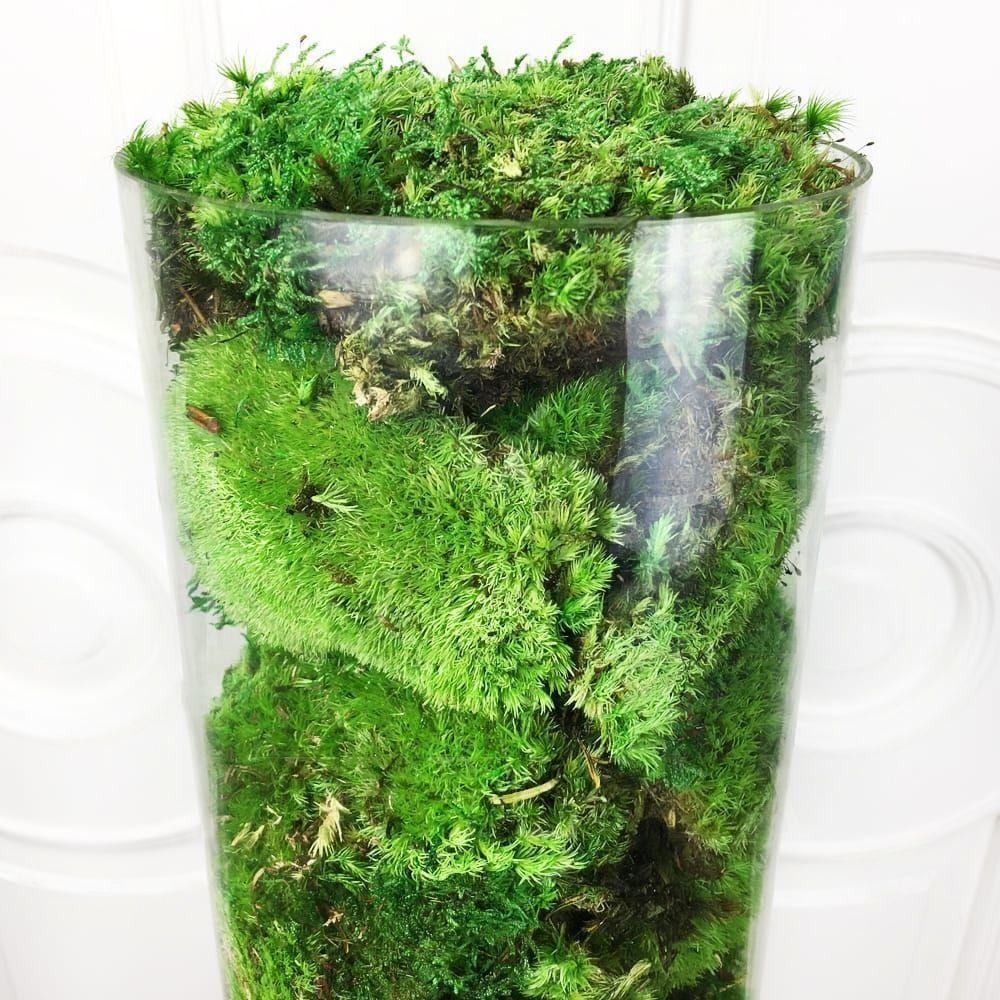 Стабилизированный кочкообразный мох в вазе 60см