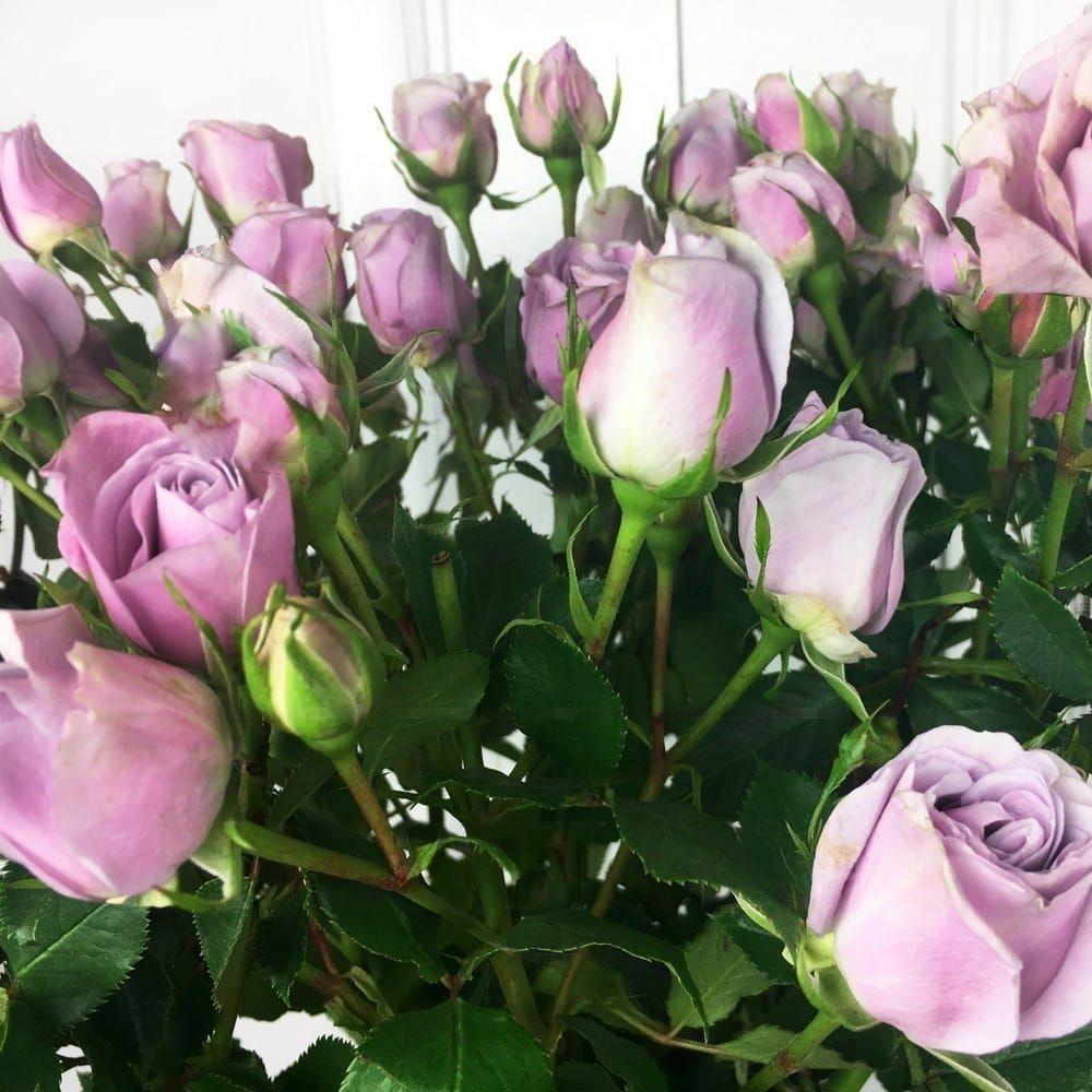Букет 9 сиреневых кустовых роз