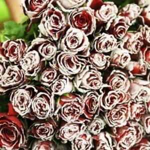 Букет 101 красная снежная роза