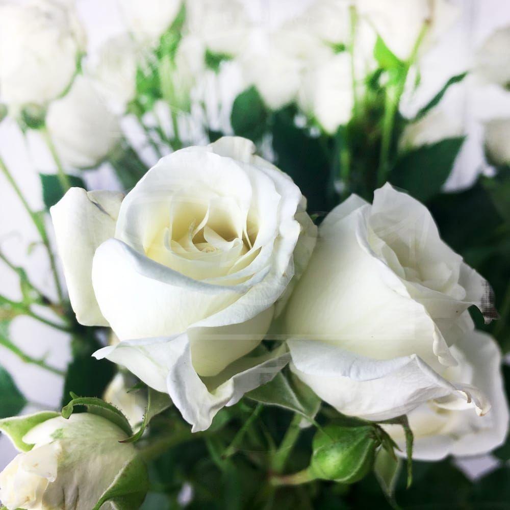 Букет 9 белых кустовых роз