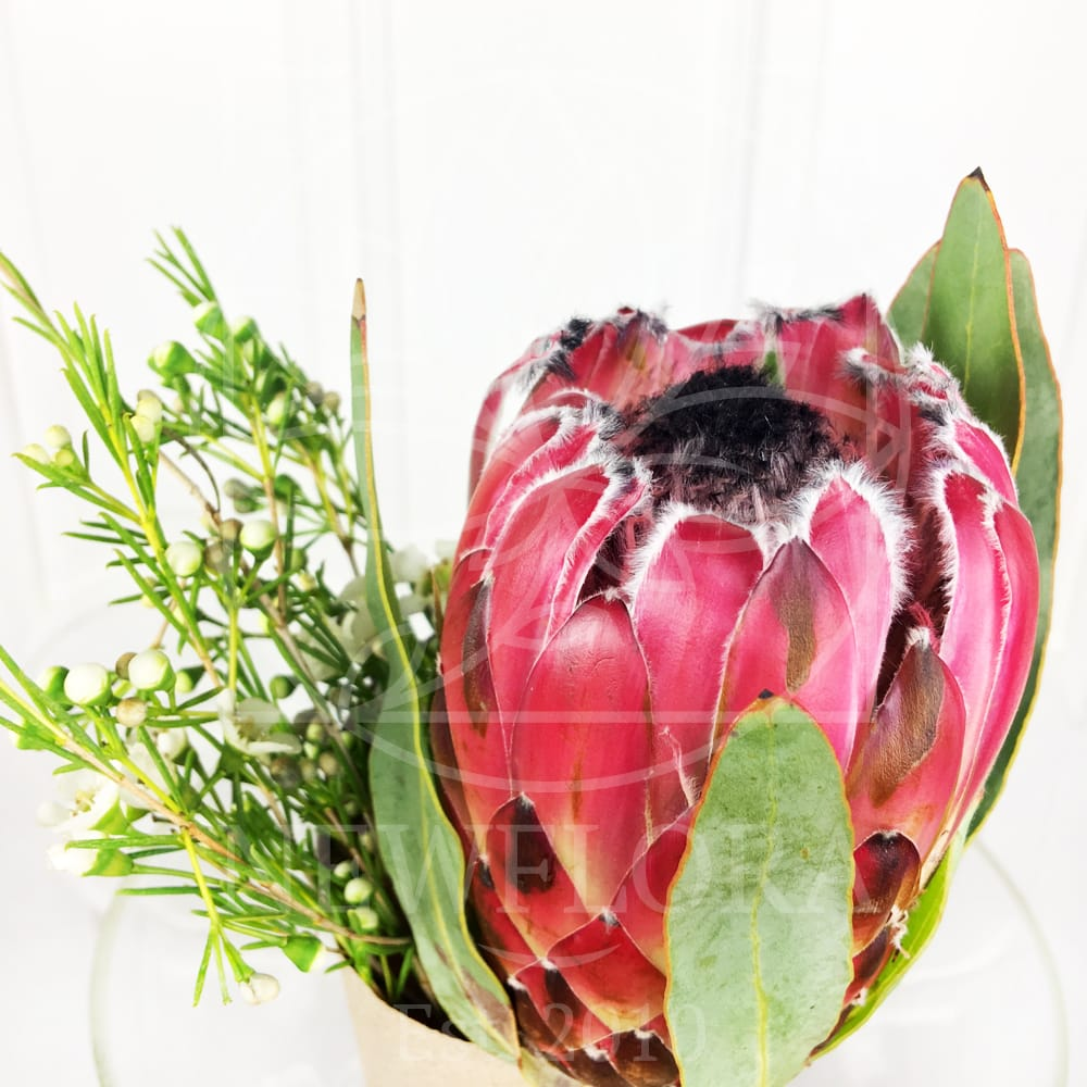 Букет красная протея с зеленью