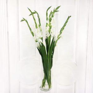 Букет 7 белых гладиолусов