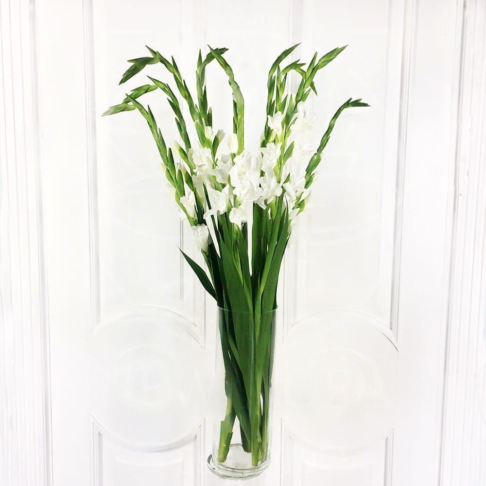 Букет 9 белых гладиолусов
