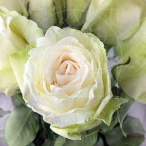 Букет 25 ароматных роз White Ohara