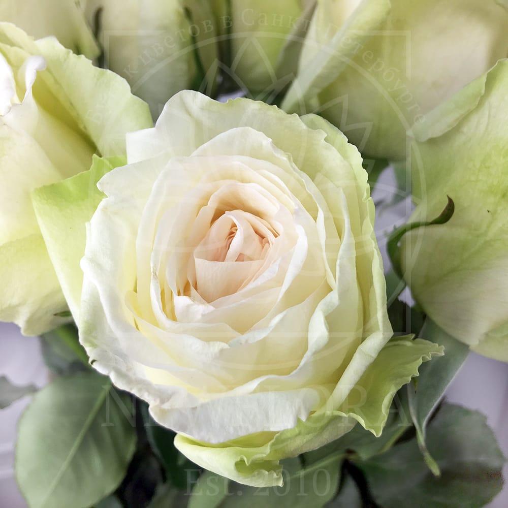 Букет 15 ароматных роз White Ohara