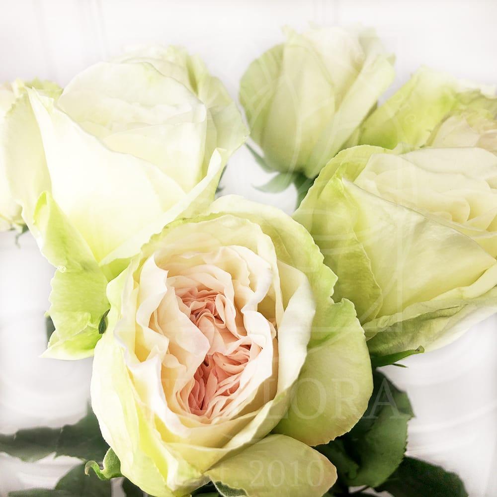 Букет 9 ароматных роз White Ohara