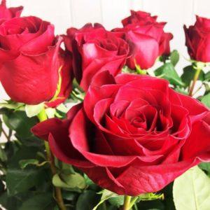 Букет 21 красная роза высотой 160см