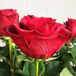 Букет 5 красных роз высотой 160см