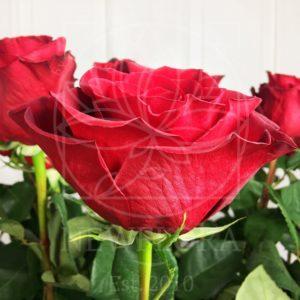 Букет 25 красных роз высотой 150см (by Сергей Рост)
