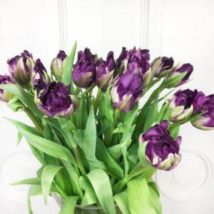 Букет 19 тюльпанов Double Black Prince