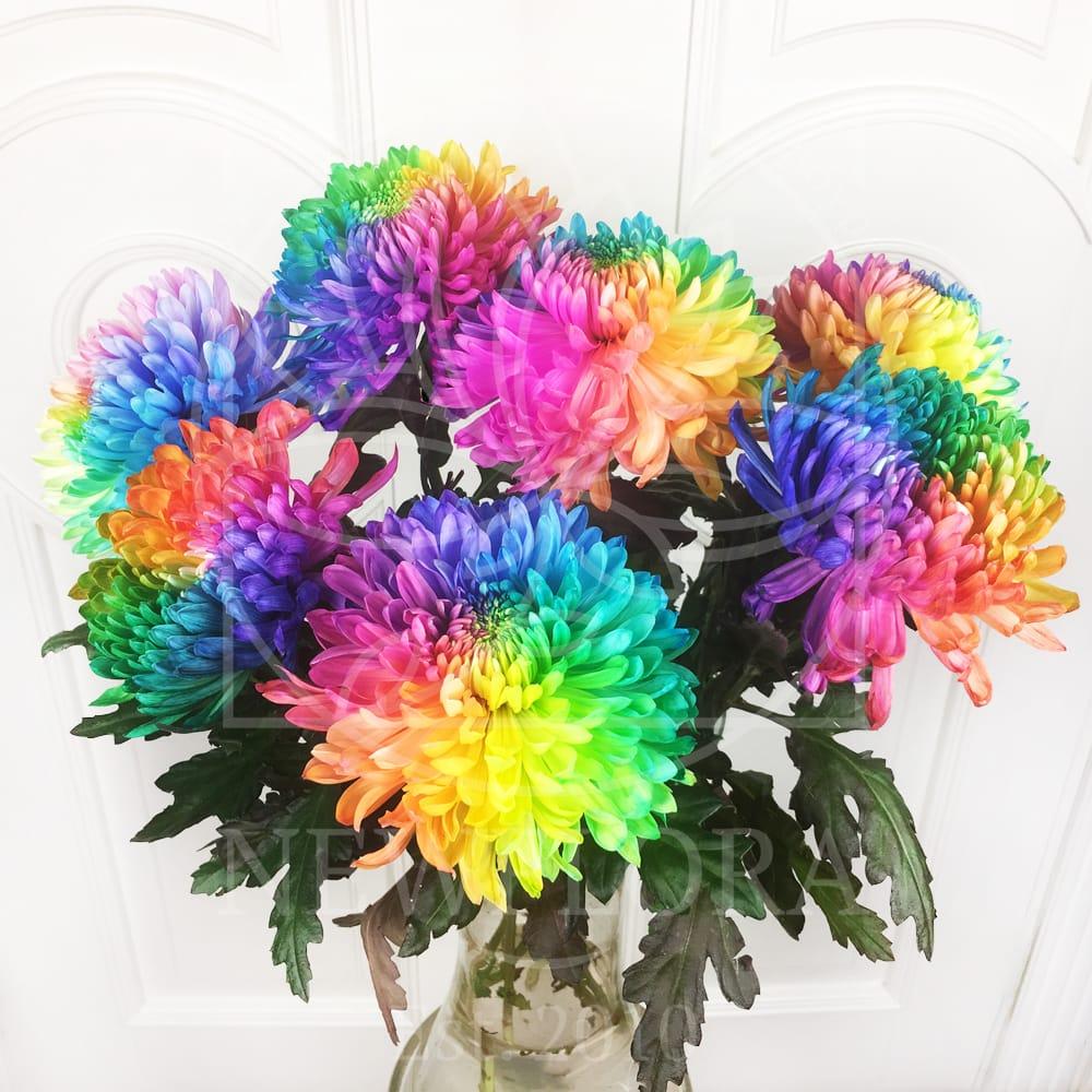 Букет 7 радужных хризантем