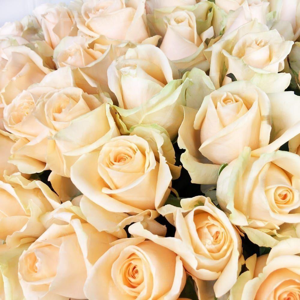 Букет 101 персиковая роза 60см