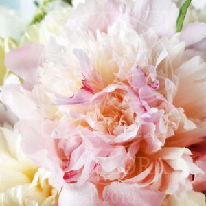 Букет 11 пионов с целлозией и розами